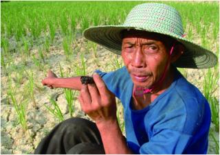 中国有机肥产业大调研