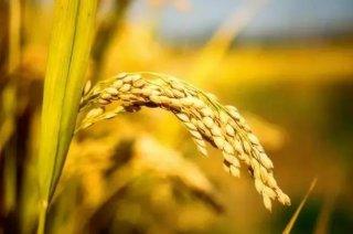 农产品初加工回归平民化,更利于品牌推广?