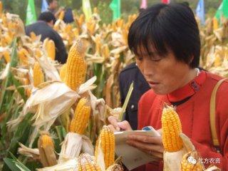 玉米价格大跌!小麦又降了