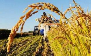 农资涨价农民如何增收?下半年粮价如何?