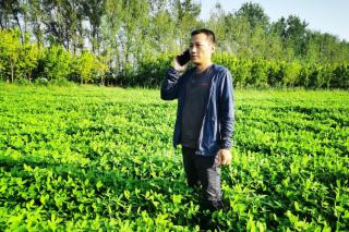 新洋丰农技服务人员指导河南灾后农业生产