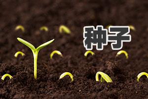 北京丰台: 严查种子市场